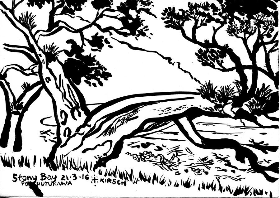 Daniel-Kirsch-drawings-Stony-Bay-Pohutukawa-21.3.2016